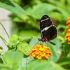 Rieman Gardens 7-13-2014 (100)