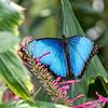 Rieman Gardens 7-13-2014 (96)