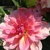 flower taken Aug 13, 2014 at Stanford Mall