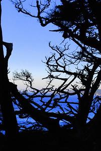 Tree Shadows Point Lobos, CA