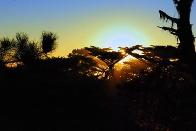 Tree Tops Point Lobos, CA