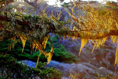 Moss Point Lobos, CA