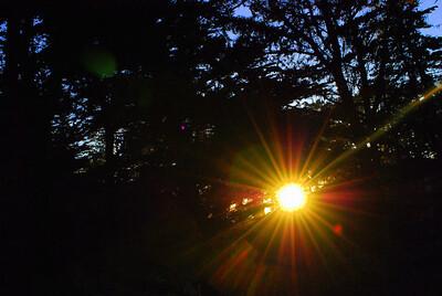 Sunlight Point Lobos, CA