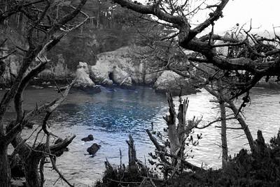 Skeleton Cove Point Lobos, CA