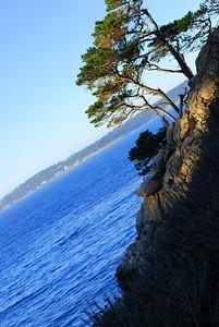 Monterey Cypress Point Lobos, CA