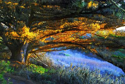 Dusk Point Lobos, CA
