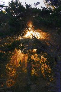 Heavenly Light Point Lobos