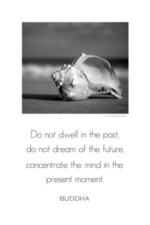 Buddha Wisdom Poster