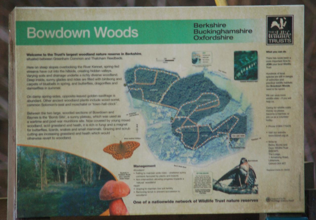Bowdown Woods March 2007