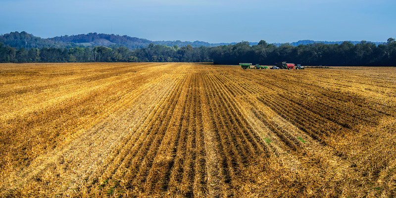 Late October- Harvest time of the year, Hwy 64, near the Richland Creek Bridge, Pulaski, Tennessee