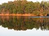 Pellicer Pond 04