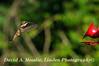 16-08-27 Hummingbird 5