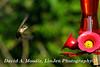 16-08-27 Hummingbird 6