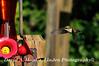 16-08-27 Hummingbird