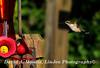 16-08-27 Hummingbird 3