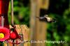 16-08-27 Hummingbird 2