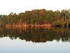 Pellicer Pond 02