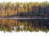 Pellicer Pond 03