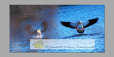 We do quality outdoor Imagery & Video