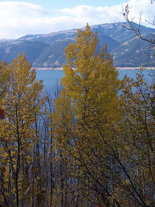 Quaking Aspen with Palisades in the background. Idaho. 10.08
