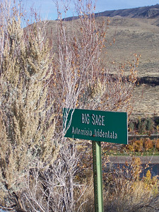 """Big Sage"" sign and sagebrush, Snake River valley, Idaho. 10.08"