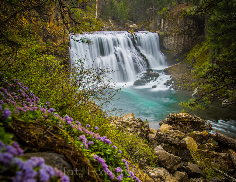 Middle McCloud Falls with blooming Squaw Carpet
