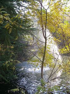 forestspray