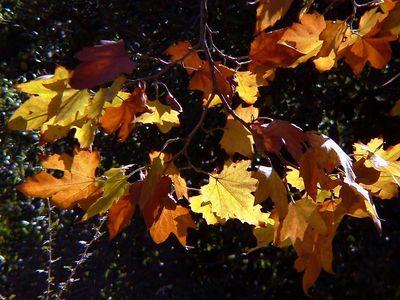 Fall in So. Cal.