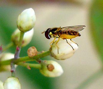 Nandino Bug (What kind?)