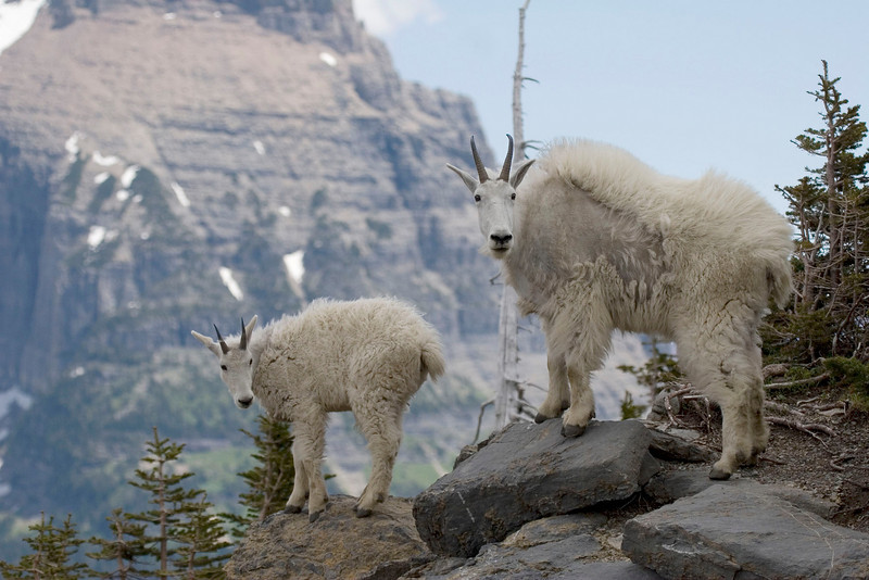 high mountain family