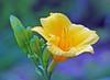Flowers_00010.jpg