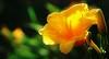 Flowers_00012.jpg