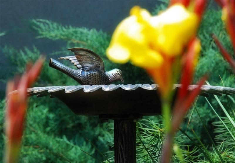 Steely-Bird-at-Fountain.jpg