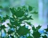 Flowers_00008.jpg