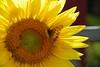 Flowers_00001.jpg