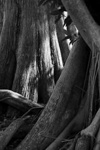 treetrunks2