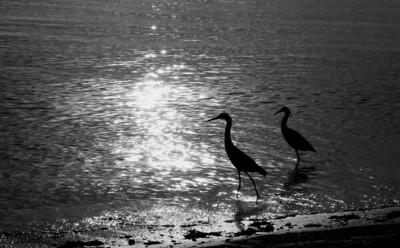 birdsatsunsetbw