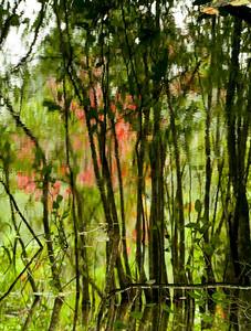 treesreflected2