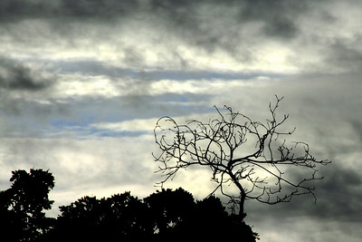 treeclouds
