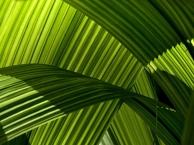 palmleaves2