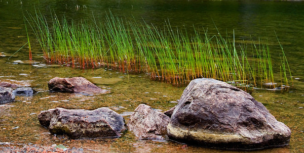 rockandweedsinwater