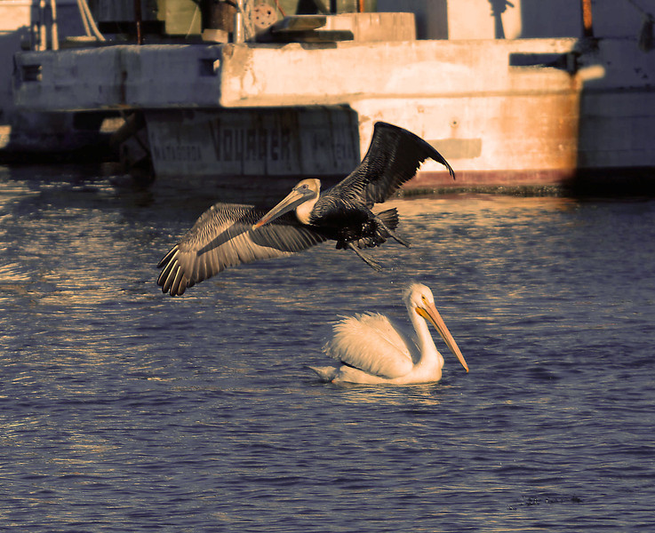 Fly-by, Galveston, Texas, 2010