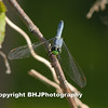 Blue Dragon-fly II, Cullinan Park, SugarLand, Texas, 2008