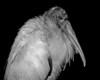 Poetic Stork
