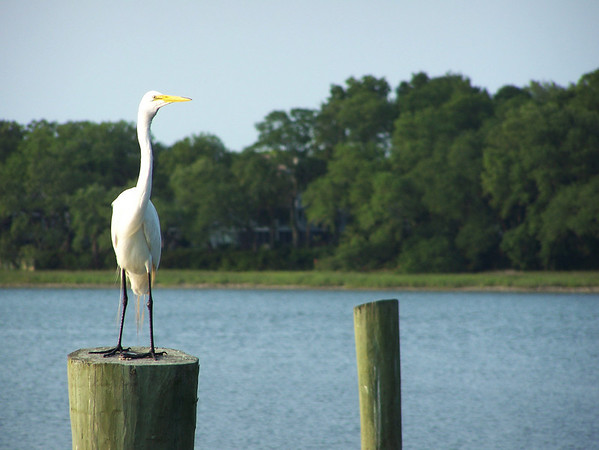 Photo by Kelly McGreehan; Hilton Head, South Carolina