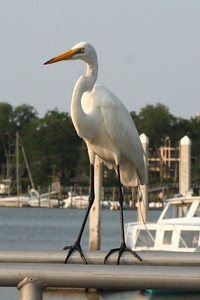 Photo by Sue McGreehan; Hilton Head, South Carolina