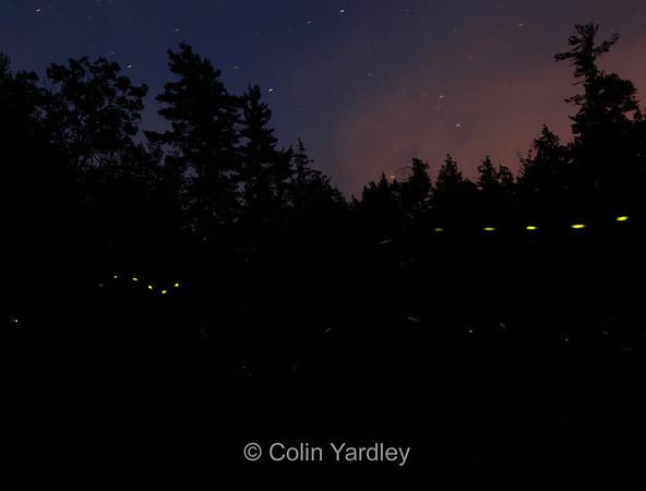 """""""Fireflies"""""""