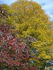 Dogwood and maple juxtaposed against the sky in fall of 2002.