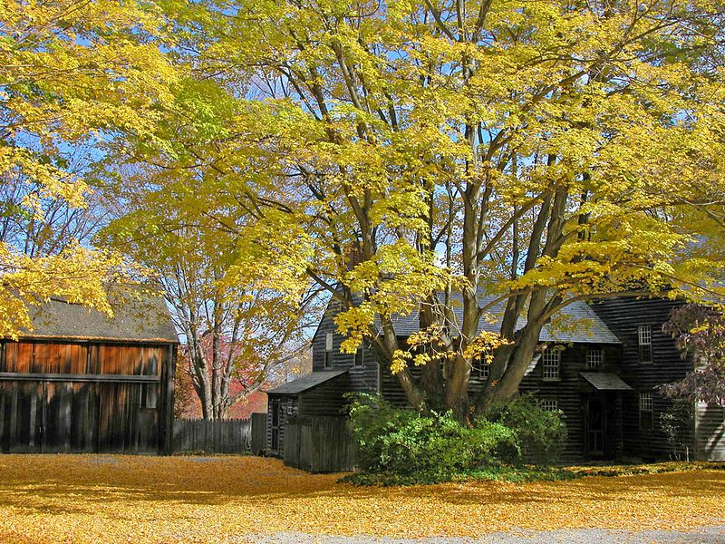 Home in a not particularly colorful fall of 2002, but the golden leaves fallen to the ground were very luminous.