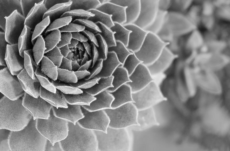 Succulent Spirals
